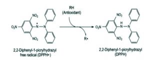 Gambar 1. DPPH• radikal bebas berubah menjadi DPPH oleh adanya antioksidan