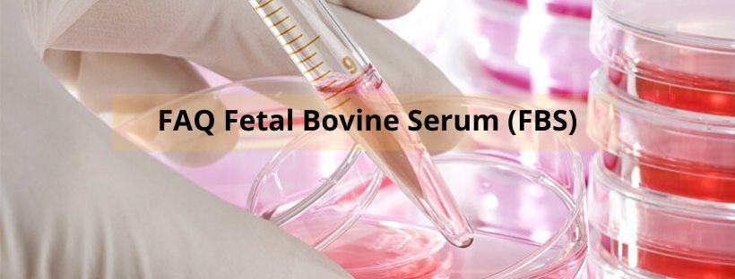 FAQ Fetal Bovine Serum (FBS)