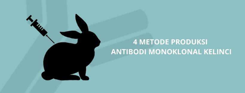 4 metode antibodi kelinci