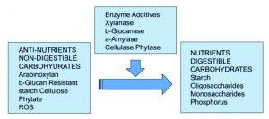 Gambar 1. Pemberian enzim dapat meningkatkan kecernaan pakan ternak