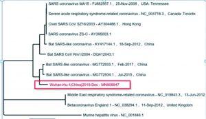 Gambar 2. Pohon filogenetik Wuhan-Hu-1 (kotak merah) terhadap coronavirus lainnya (NCBI, 2020)