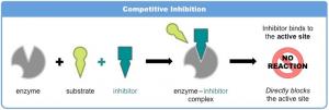 Gambar 2. Reaksi Inhibisi Enzim Kompetitif