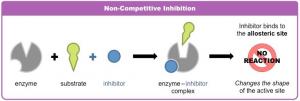 Gambar 3. Reaksi Inhibisi Enzim non-kompetitif