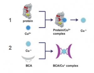 Gambar 1. Reaksi Kimia Metode BCA