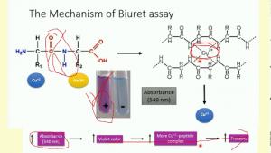Gambar 2. Reaksi Metode Biuret