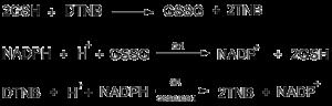 Gambar 3. Reduksi GSSG menjadi GSH oleh glutathione reductase