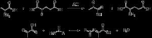 Gambar 4. Reaksi Konversi dengan enzim ALT