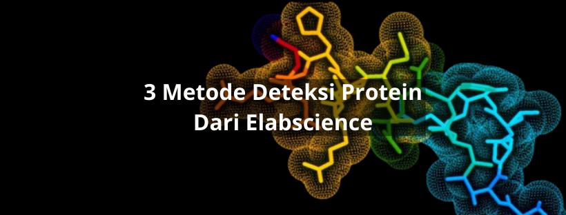 Metode Deteksi Protein