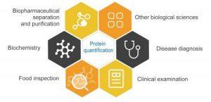 Gambar 1. Area Yang Membutuhkan Deteksi Protein