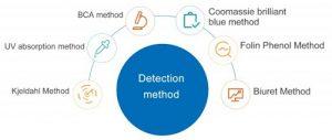 Gambar 2. Metode Deteksi Protein