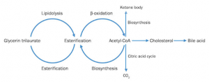 Proses Metabolisme Lipid