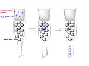 Kromatografi gel permeasi dalam purifikasi protein.